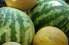 Mellons royalty free stock photography