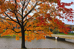 Mellow autumn. Pond in the autumn in city park stock photography