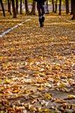 Mellow autumn. Autumn time, on trees yellow leaves Royalty Free Stock Photos