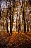 Mellow autumn. Autumn time, on trees yellow leaves Royalty Free Stock Image