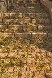 Mellow autumn Royalty Free Stock Photos
