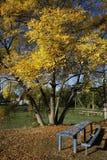 Mellow autumn stock images