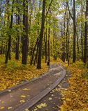 Mellow autumn. Alley in public park covered with yellow maple leaves stock photography