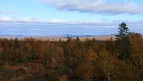 Mellow autumn, autumn forest. stock video footage