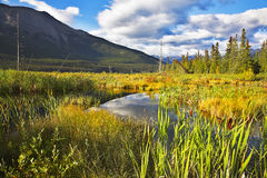 Mellow autumn in reserve of Northern Canada Royalty Free Stock Images