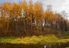 Mellow autumn on river bank Stock Photography