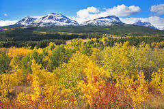 Mellow autumn. The trees with yellow  foliage Royalty Free Stock Image