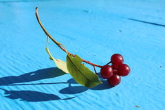 Mellow cherries brunch 2 Stock Photo