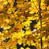 Mellow herfst Royalty-vrije Stock Foto's