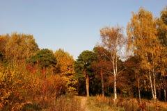Mellow herfst stock afbeelding