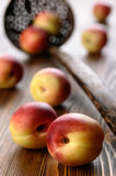 Mellow nectarines Royalty Free Stock Images