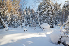 The mellow pure white snow in the winter forest Royalty Free Stock Photos