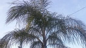 Mellow tree Stock Photography