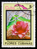 Melocactus actinacanthus arece,古巴的serie花,大约198 免版税库存图片