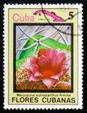 Melocactusactinacanthus arece, serie Bloemen van Cuba, circa 198 Royalty-vrije Stock Afbeeldingen