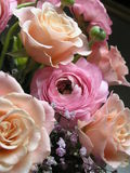 Melocotón y color de rosa Fotos de archivo libres de regalías