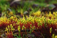 Melodía colorida de la primavera El despertar de la naturaleza de la primavera fotografía de archivo libre de regalías