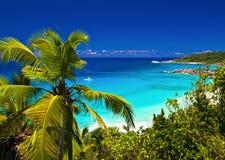 Melodia tropical Fotografia de Stock