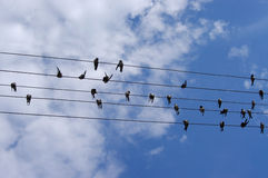 Melody. Five birds on wires on sky background Stock Photo