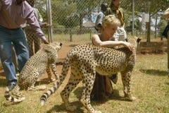 Melody Taft of Humane Society of US visits Cheetah in animal facility of Nairobi, Kenya, Africa at the KWS Kenya Wildlife Service Royalty Free Stock Photo