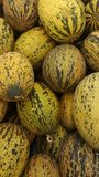 Meloenen bij de kruidenierswinkelopslag die worden opgesteld stock foto's