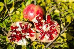 Melograni, frutta della stagione, ricche variopinti in vitamine ed antiossidante; ideale per i ricchi di una cucina nei menu e fe fotografia stock libera da diritti