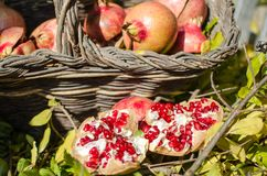 Melograni, frutta della stagione, ricche variopinti in vitamine ed antiossidante; ideale per i ricchi di una cucina nei menu e fe fotografie stock libere da diritti