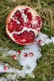 Melograno nell'erba di inverno immagine stock libera da diritti