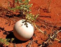 Melon épineux de paddy Photographie stock libre de droits