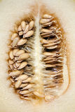 Melon. View of a melon sliced open showing the seeds Royalty Free Stock Image
