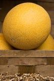 Melon. In fruit & vegetables shop Stock Image