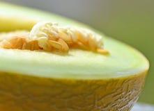 Melon Photographie stock libre de droits