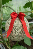 melon Royaltyfria Bilder