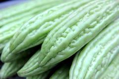 Melon amer Image libre de droits