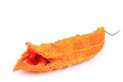 Melon amer Images libres de droits