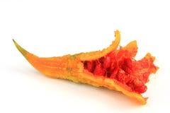 Melon amer (charantia de Momordica) Image libre de droits
