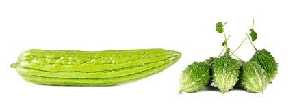 Melon amer d'isolement sur le fond blanc Image stock
