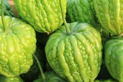 Melon amer frais Photo libre de droits