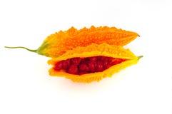 Melon amer ou momordica jaune d'isolement sur le blanc Photographie stock libre de droits