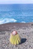 Melon cactus Royalty Free Stock Image