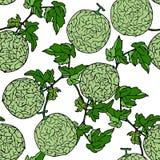 Melon Cantalop sömlös modell vid handteckningen på vit backgr Arkivfoton