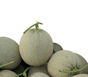 Melon or Cantaloupe fruit new harvest plucked from the garden, i Stock Image