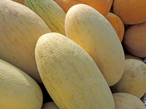 Melon close-up Royalty Free Stock Photos