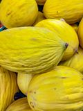 The melon Cucumis melo L., 1753 is a climbing plant of the Cucurbitaceae family [1]. The term melon indicates both the fruit an. D the plant, depending on the royalty free stock photo