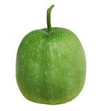 Melon d'hiver Image stock