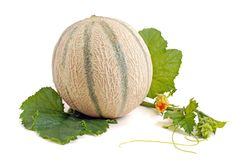 Melon de Cantelope Image libre de droits
