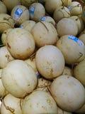 Melon de roi de Yubari Photographie stock