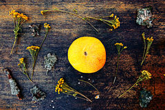 Melon and dried chamomile close up view over dark background. Stock Image