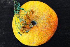 Melon et fin sèche de camomille vers le haut de vue au-dessus de fond foncé Image libre de droits