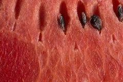 melon imagens de stock royalty free